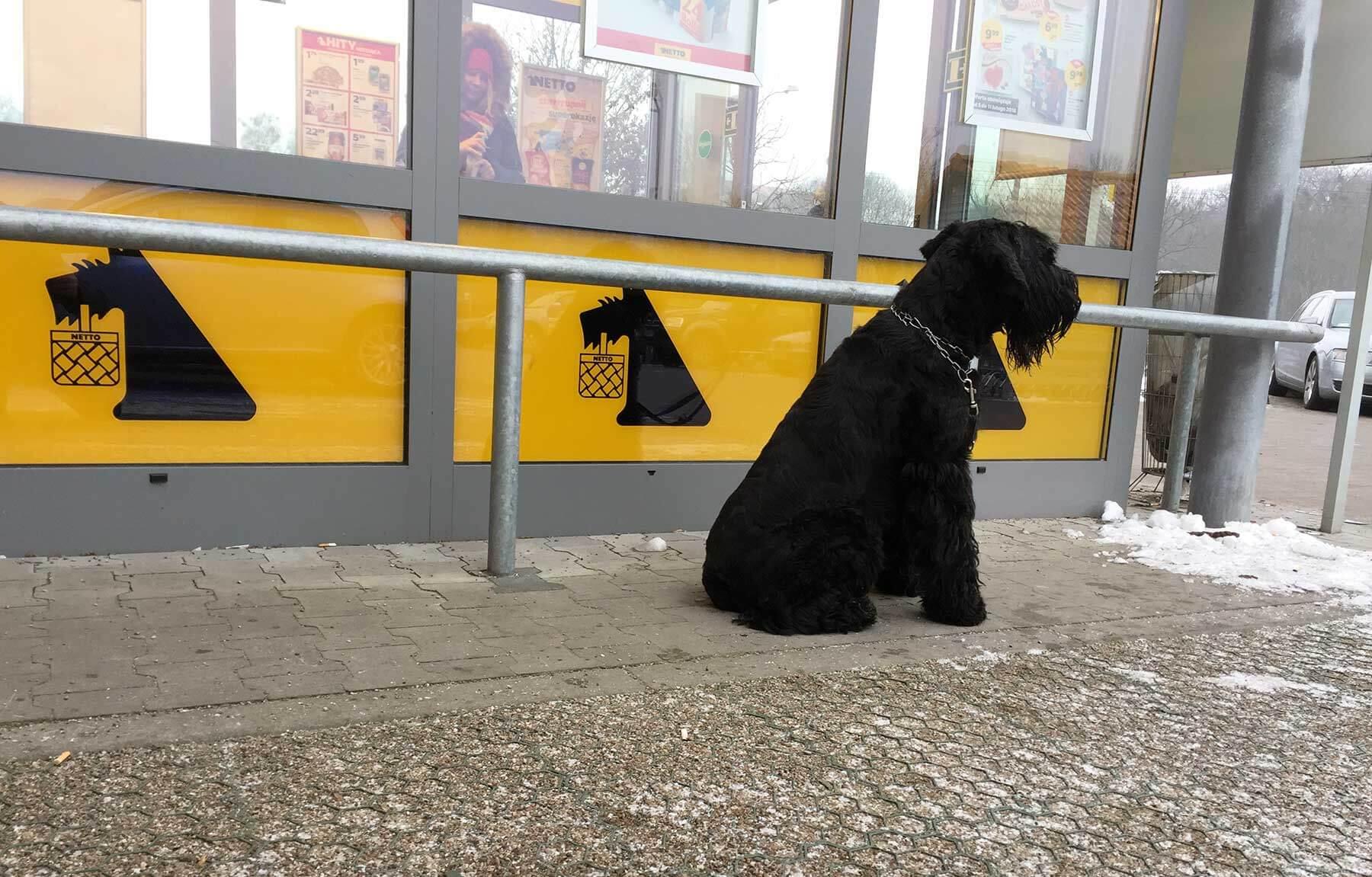 Bilderparade CDLXXXVI LangweileDich.net_Bilderparade_CDLXXXVI_01